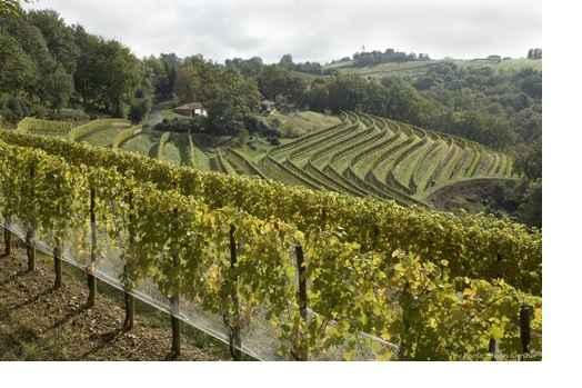 jardins-babylone-dagueneau-vignes