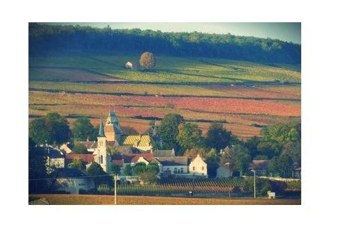 Corton aloxe vins vignoble grands crus