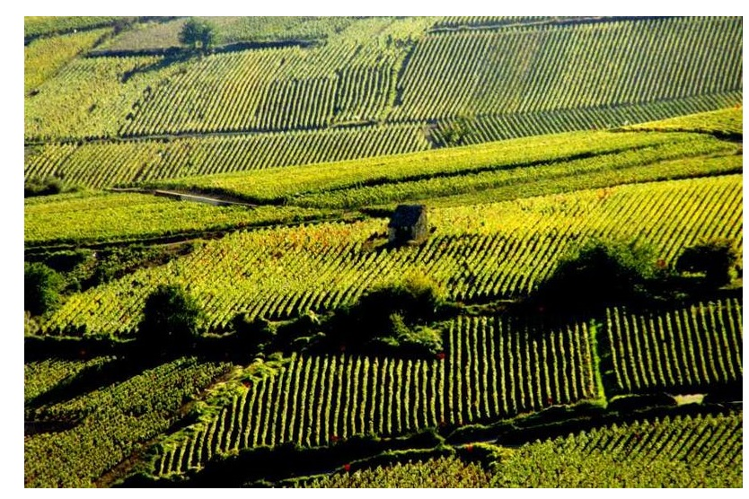 Beaune vignoble vins grands crus