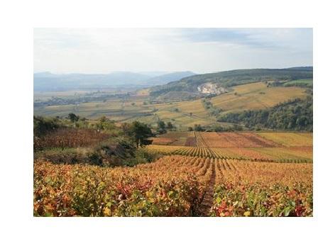 chassagne vignoble vins