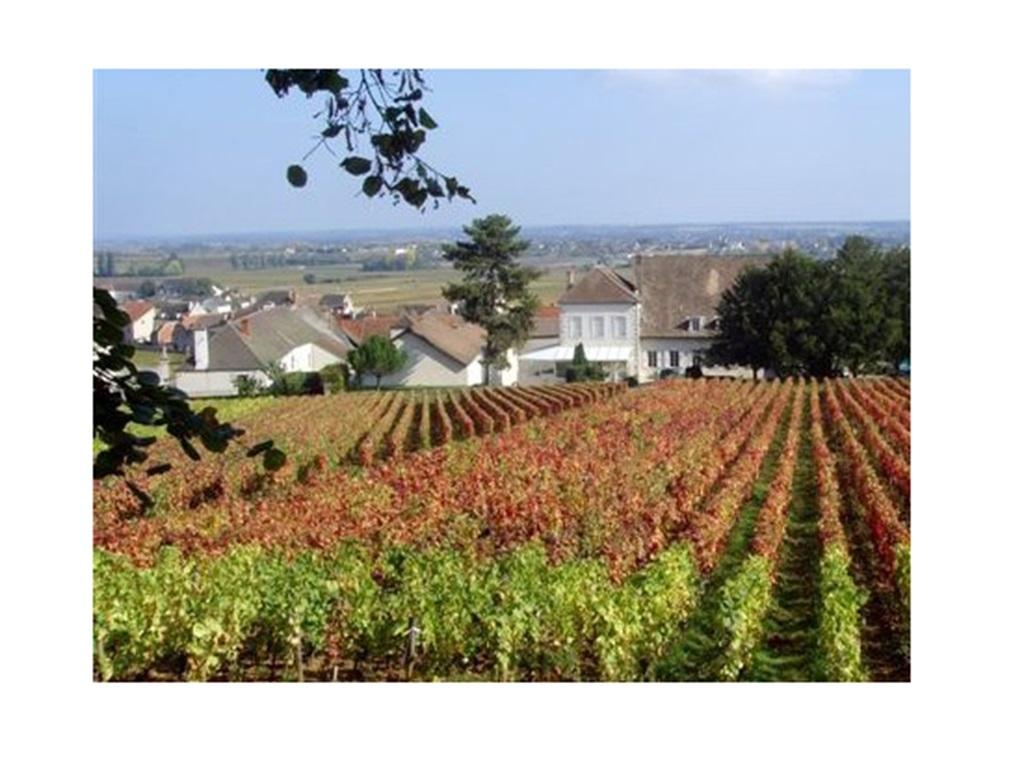 chassagne grands crus blancs vins