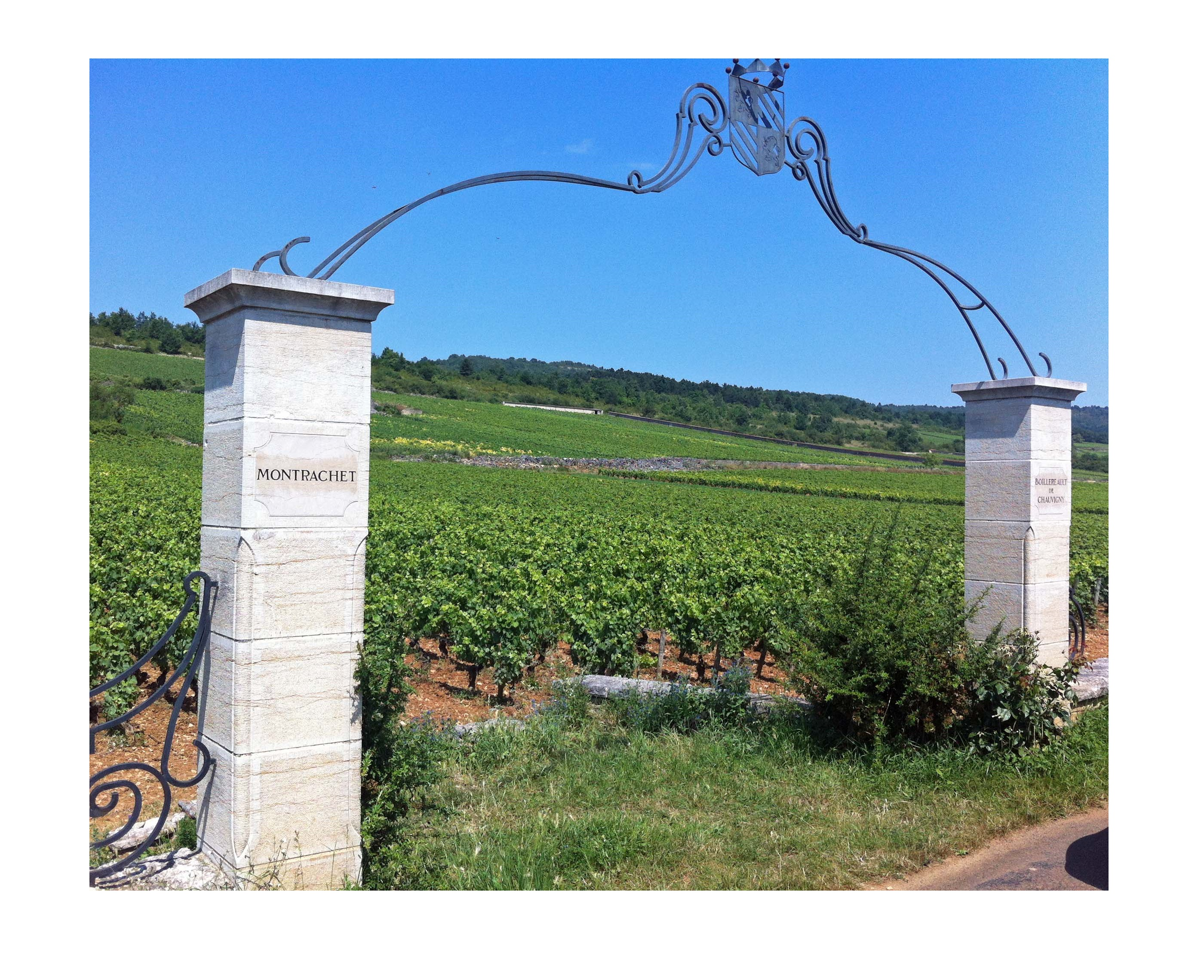 Chassagne vignoble vins grands crus Montrachet