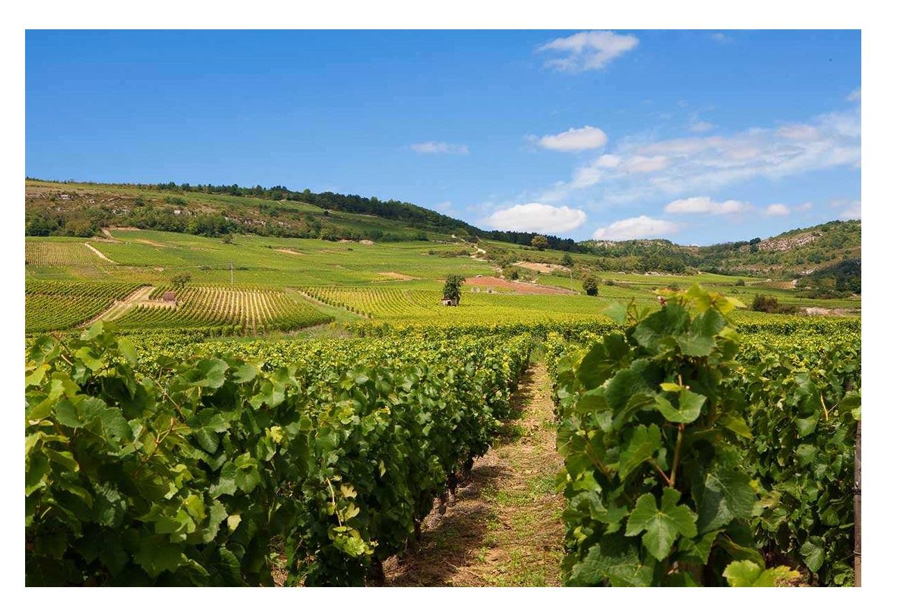 Ladoix village viticole grands crus vins