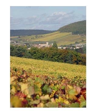 Macon vignes vins blancs rouges bourgogne