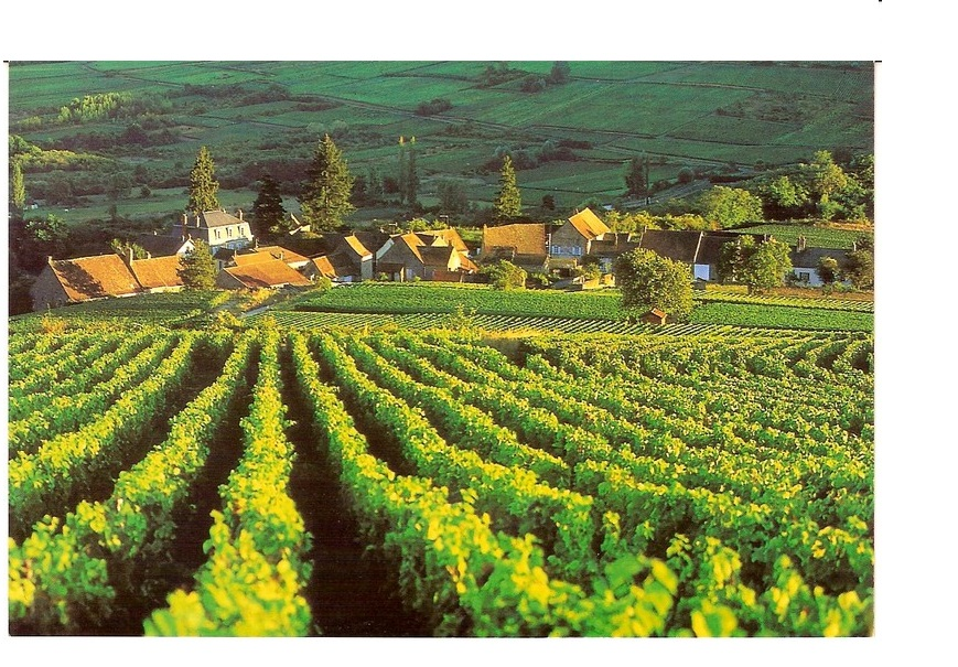 Maranges grands vins premiers crus vignes