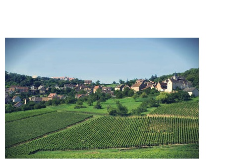 montagny blanc premiers crus vins