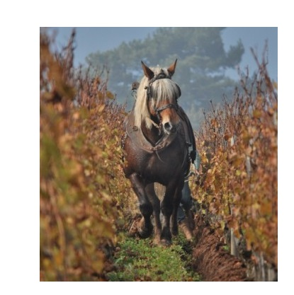 labourage bret brothers macon vinzelles vins bio