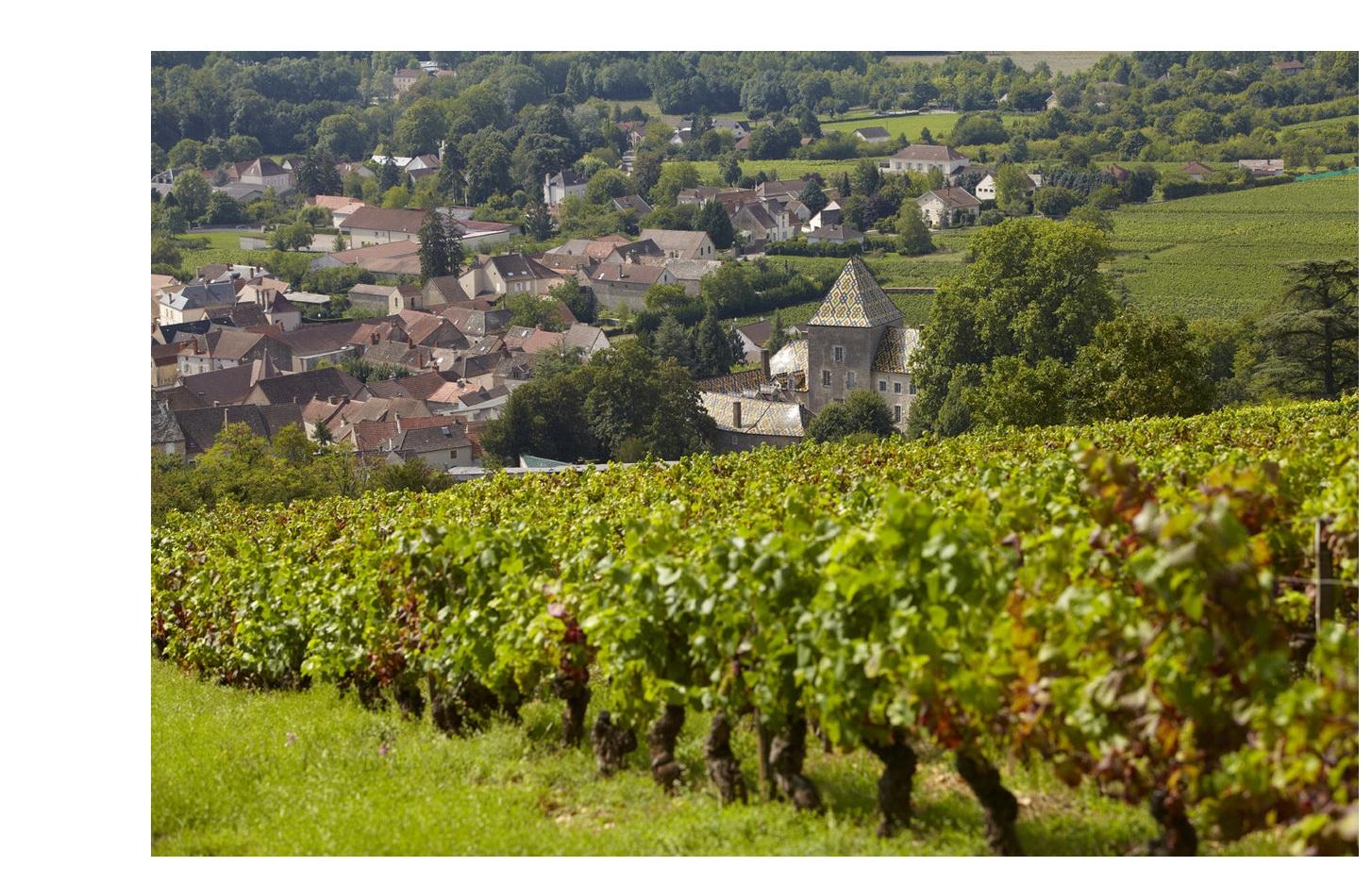 Santenay vignoble vins premiers crus