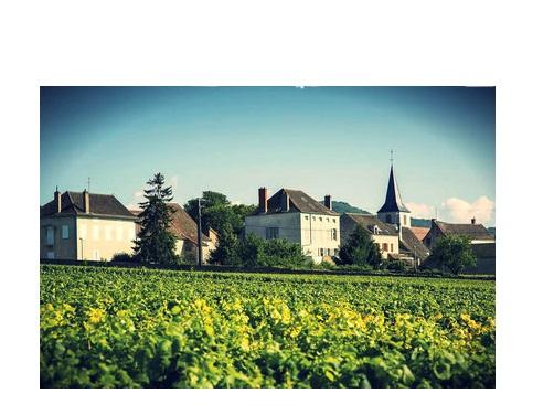 vignoble viticole vosne romanée grand cru