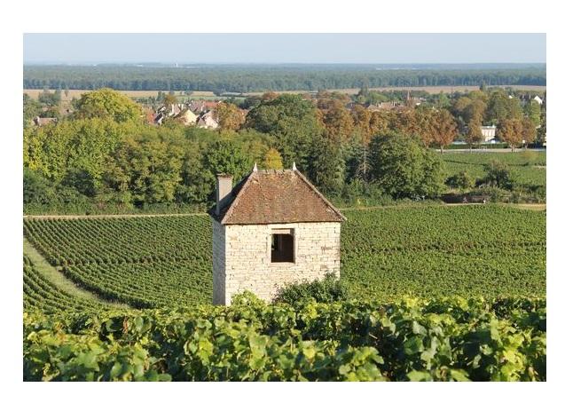 vins chalon premiers crus blancs rouge