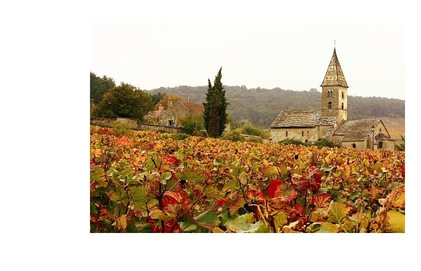 Vigne viticole Nuits grands crus vins