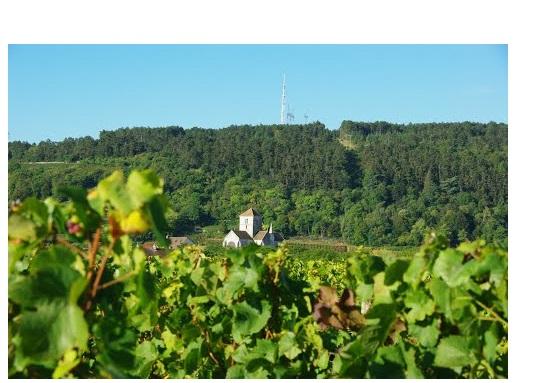 nuits vins premiers crus rouge saint georges