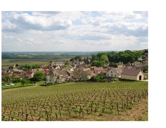 Volnay grands vins rouge