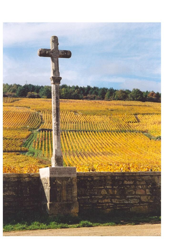 romane conti meilleur vin monde