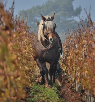 Labour à cheval au Domaine La Soufrandière