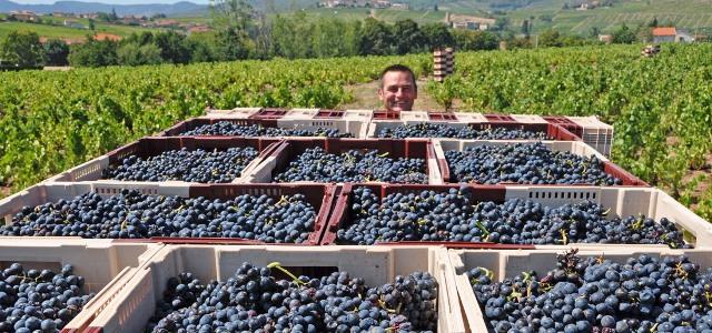 Jean- Claude Lapalu - vins du Beaujolais