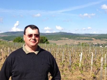 Vignes de Viré-Clessé, bourgogne blanc du maconnais